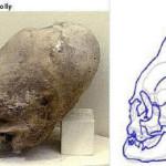 Espécimen C1 - Conehead 1