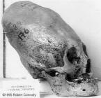 Espécimen C2 - Conehead 2