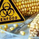 Maiz transgénico - El monopolio de las semillas